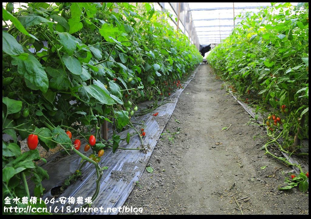 金水農情164-安梅農場_DSC8319