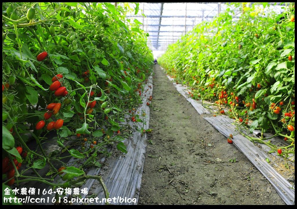 金水農情164-安梅農場_DSC8323