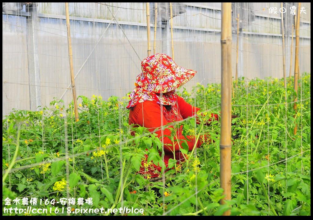 金水農情164-安梅農場_DSC8330