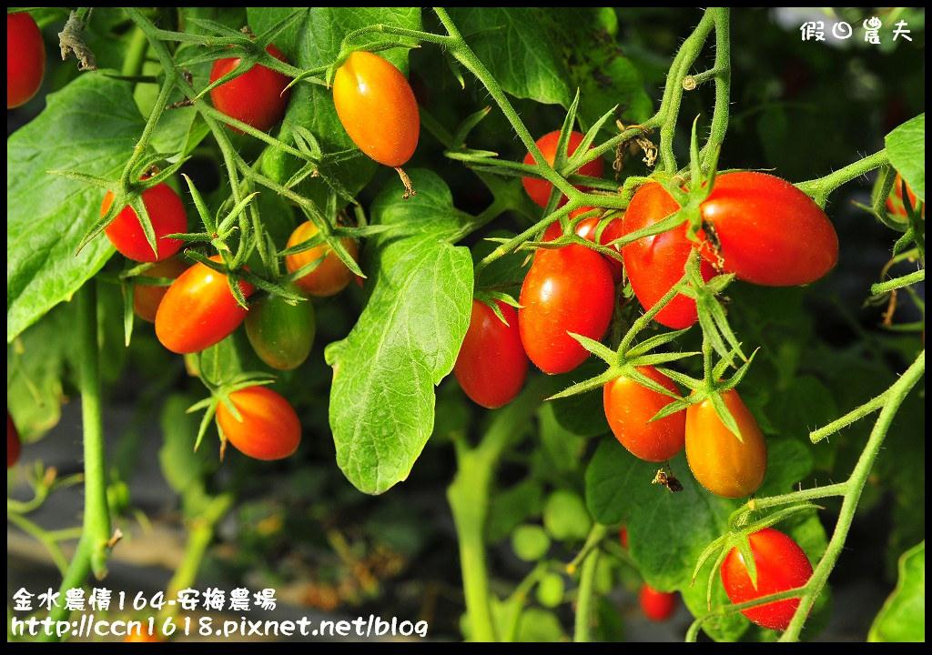 金水農情164-安梅農場_DSC8333