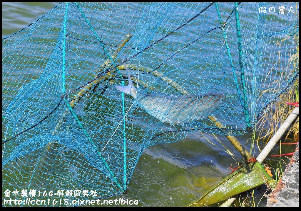 金水農情164-好蝦冏男社_DSC8380