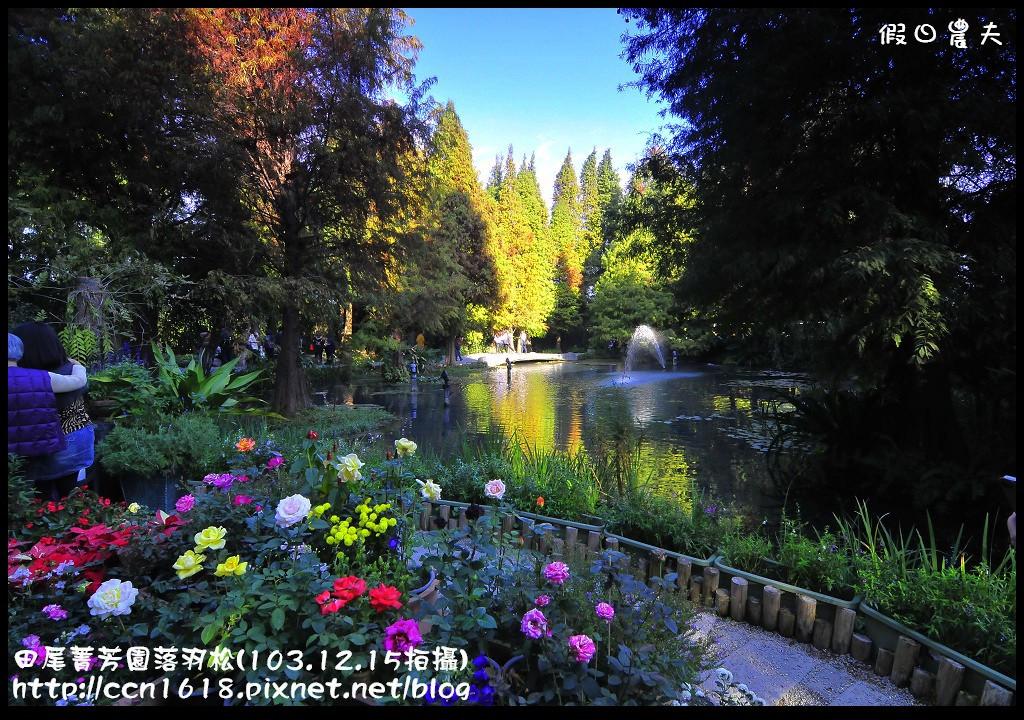 田尾菁芳園落羽松_DSC8965