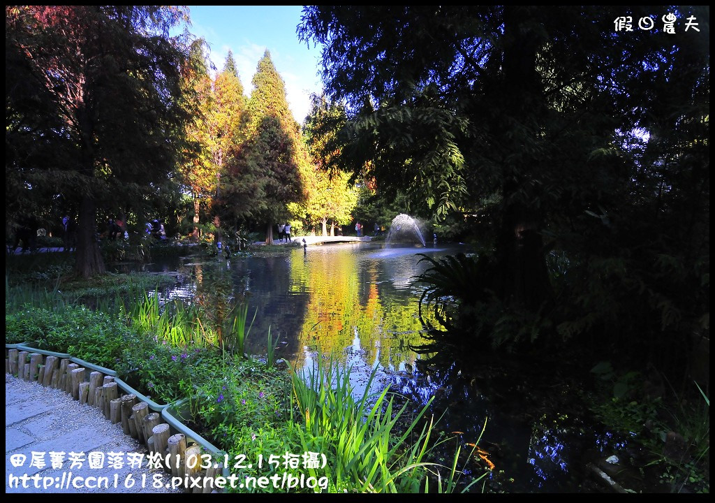 田尾菁芳園落羽松_DSC8966