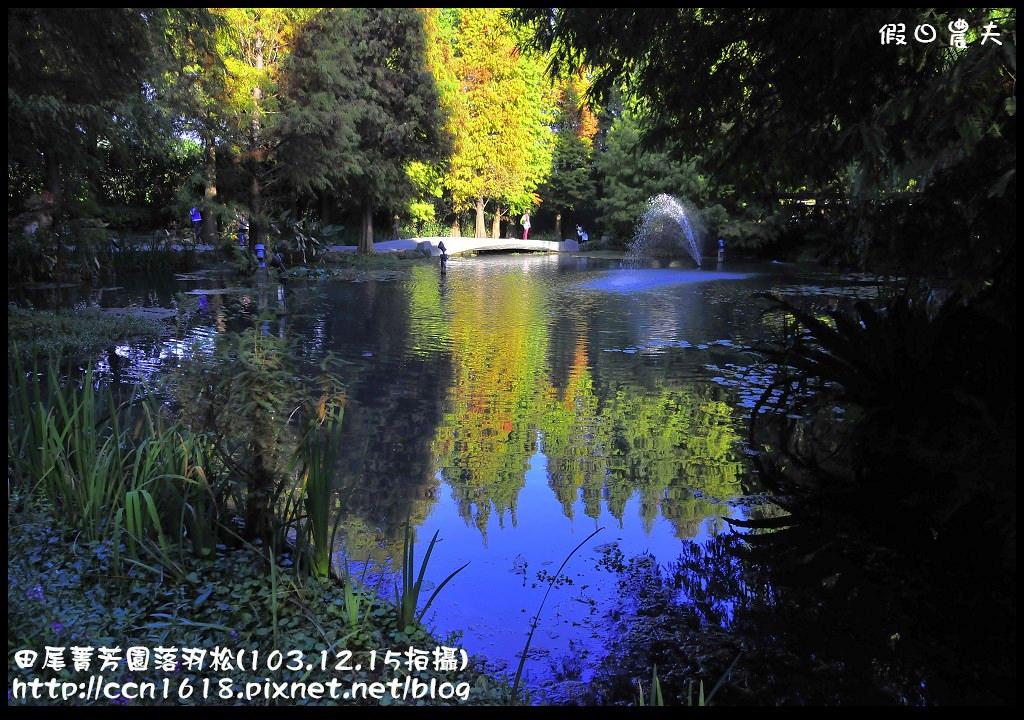 田尾菁芳園落羽松_DSC8986