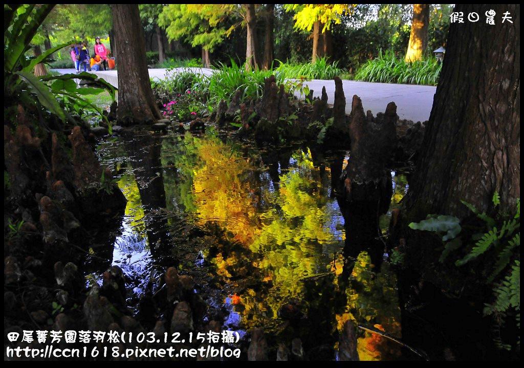 田尾菁芳園落羽松_DSC9055
