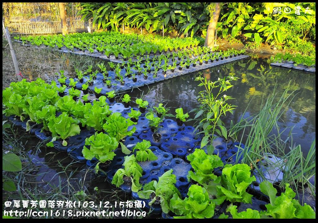 田尾菁芳園落羽松_DSC9078