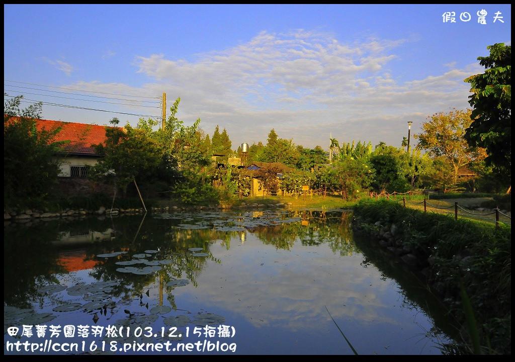 田尾菁芳園落羽松_DSC9088