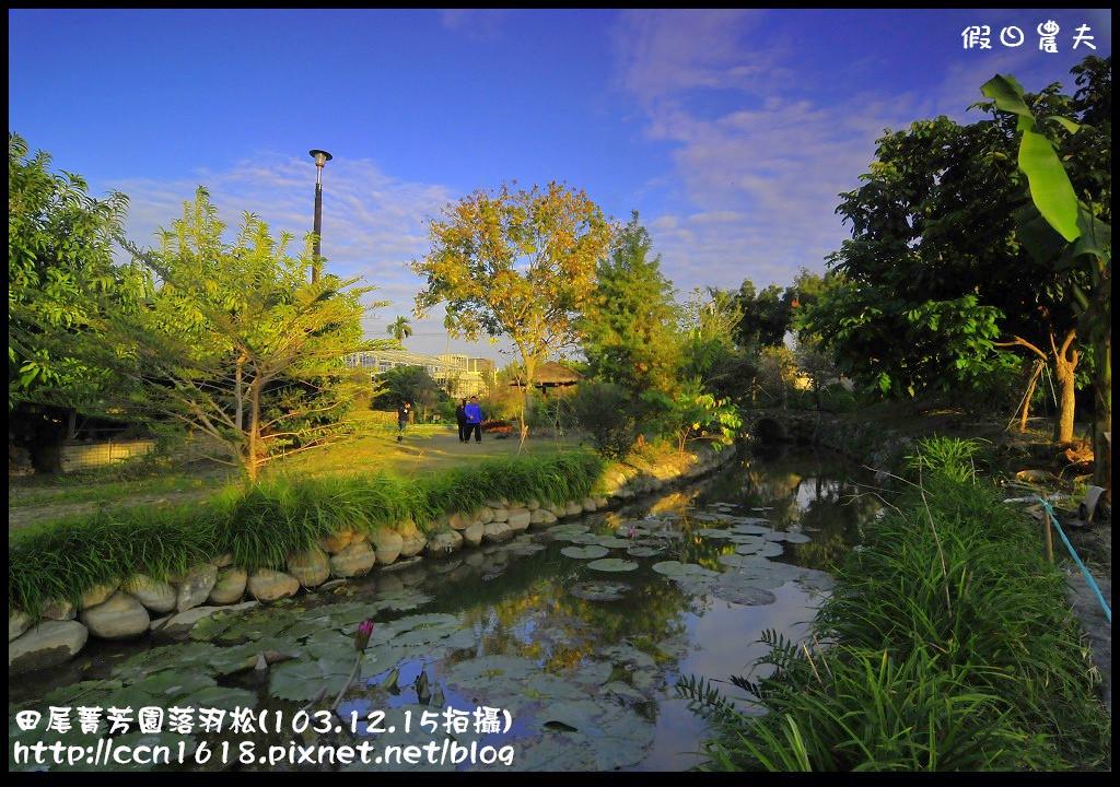 田尾菁芳園落羽松_DSC9092