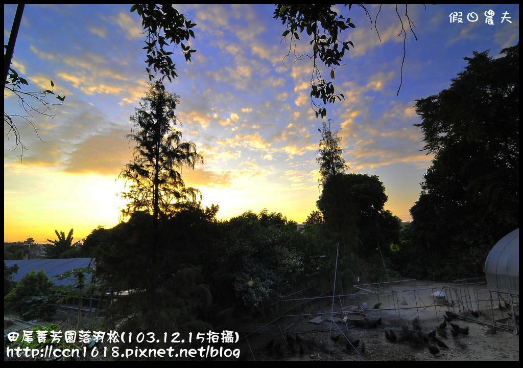 田尾菁芳園落羽松_DSC9146