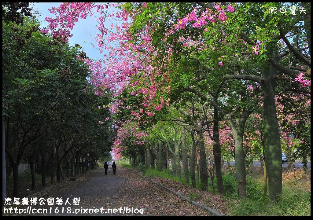 虎尾農博公園美人樹_DSC7507