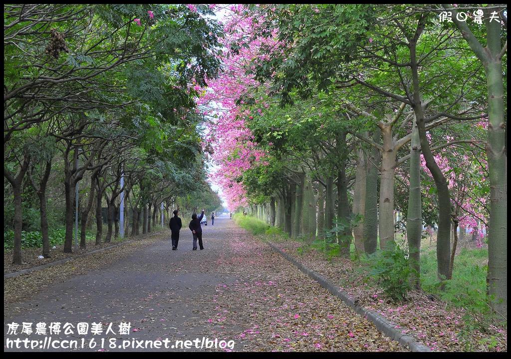 虎尾農博公園美人樹_DSC7512
