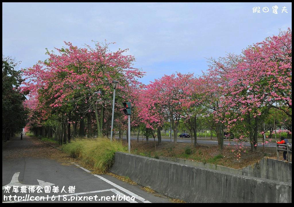 虎尾農博公園美人樹_DSC7525