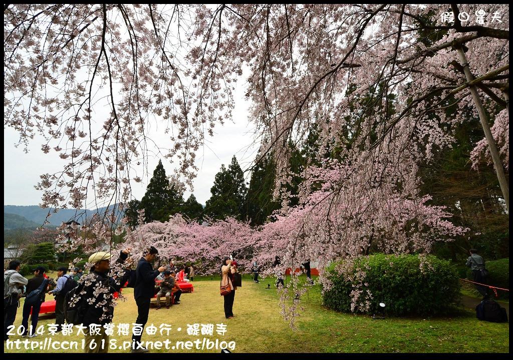 2014京都大阪賞櫻自由行.醍醐寺DSC_0048