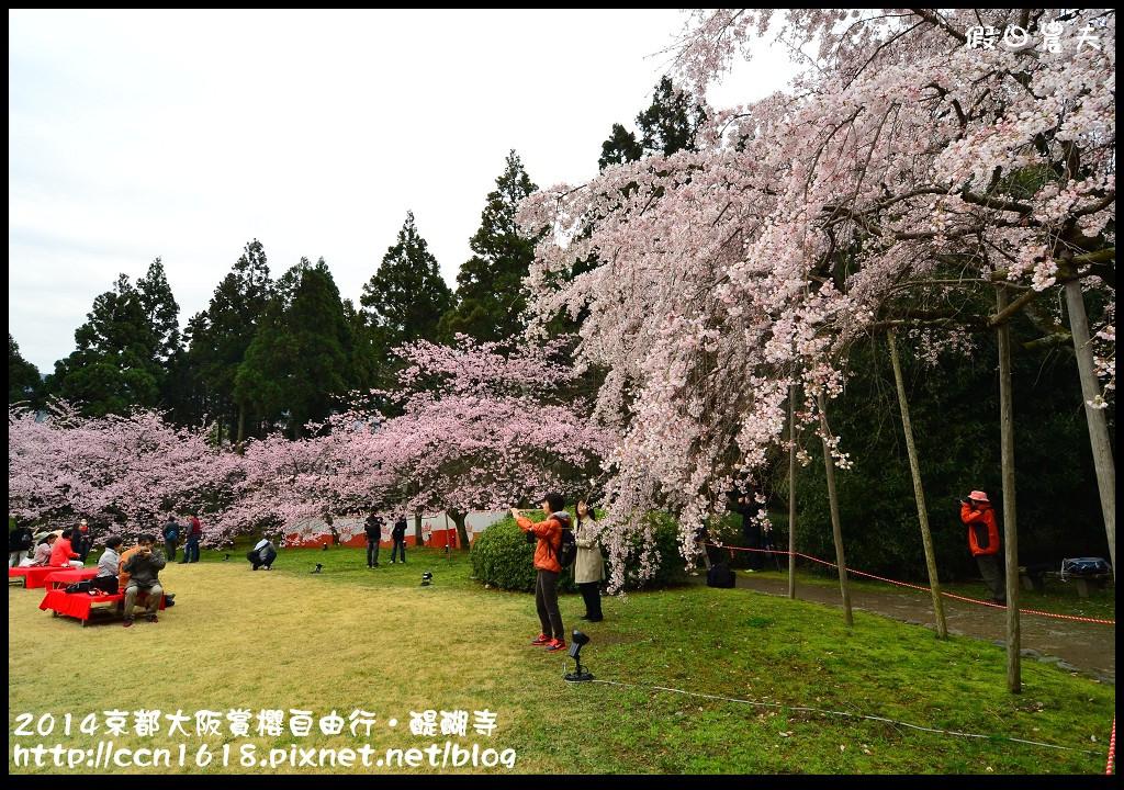 2014京都大阪賞櫻自由行.醍醐寺DSC_0052