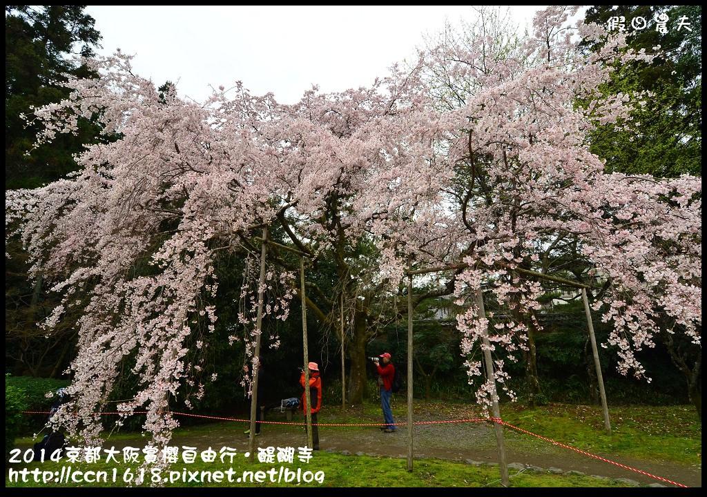2014京都大阪賞櫻自由行.醍醐寺DSC_0055