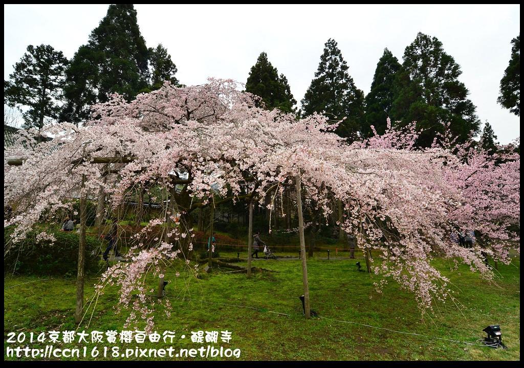 2014京都大阪賞櫻自由行.醍醐寺DSC_0062