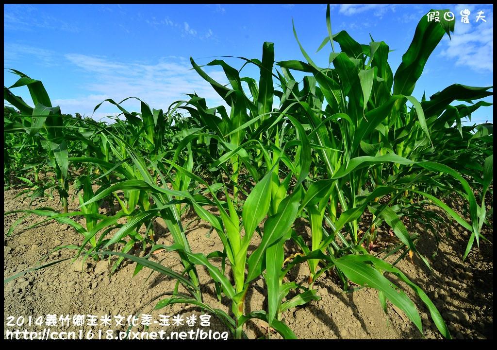 2014義竹鄉玉米文化季DSC_6024