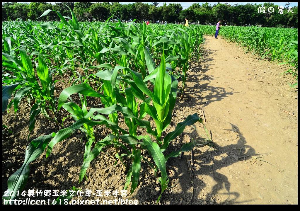 2014義竹鄉玉米文化季DSC_6027