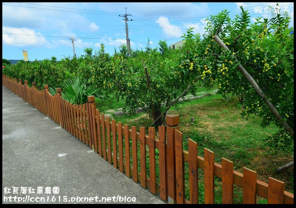 紅瓦厝紅棗農園DSC_4540
