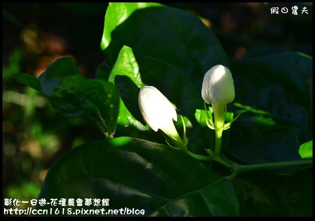 彰化一日遊-花壇農會夢想館DSC_7724
