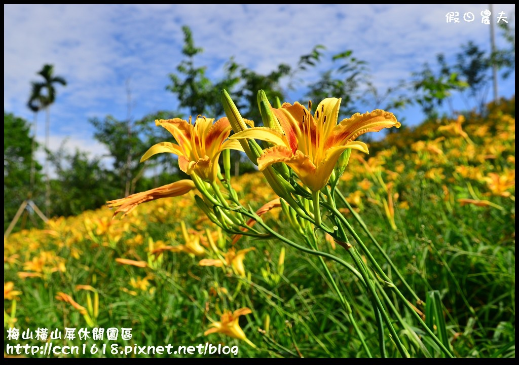 梅山橫山屏休閒園區DSC_8008