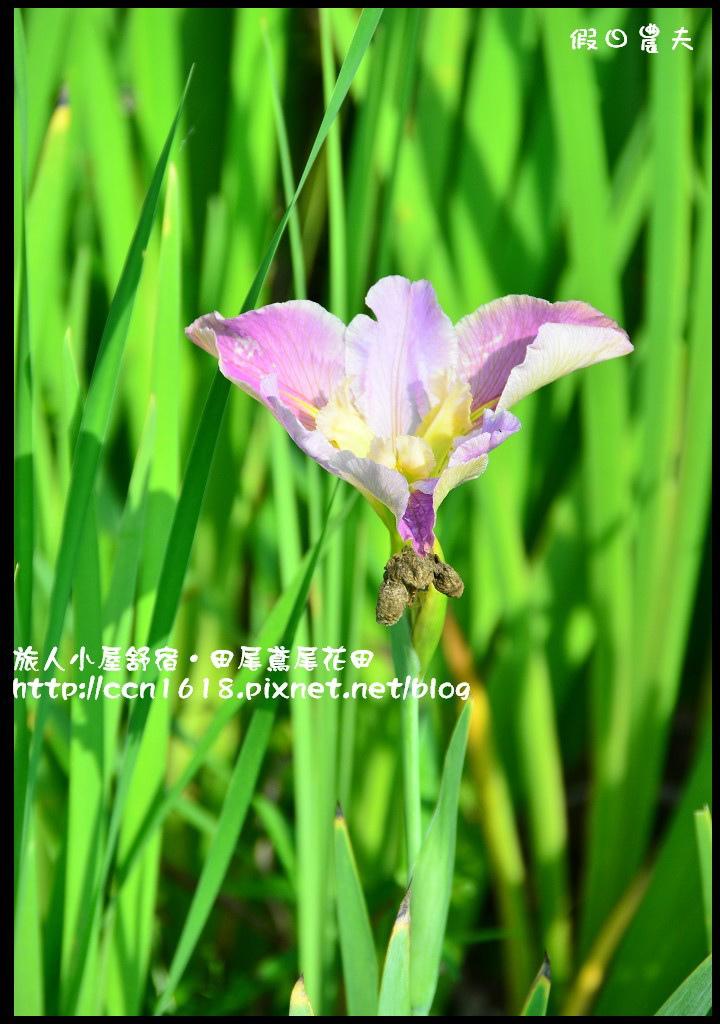 旅人小屋舒宿DSC_6507