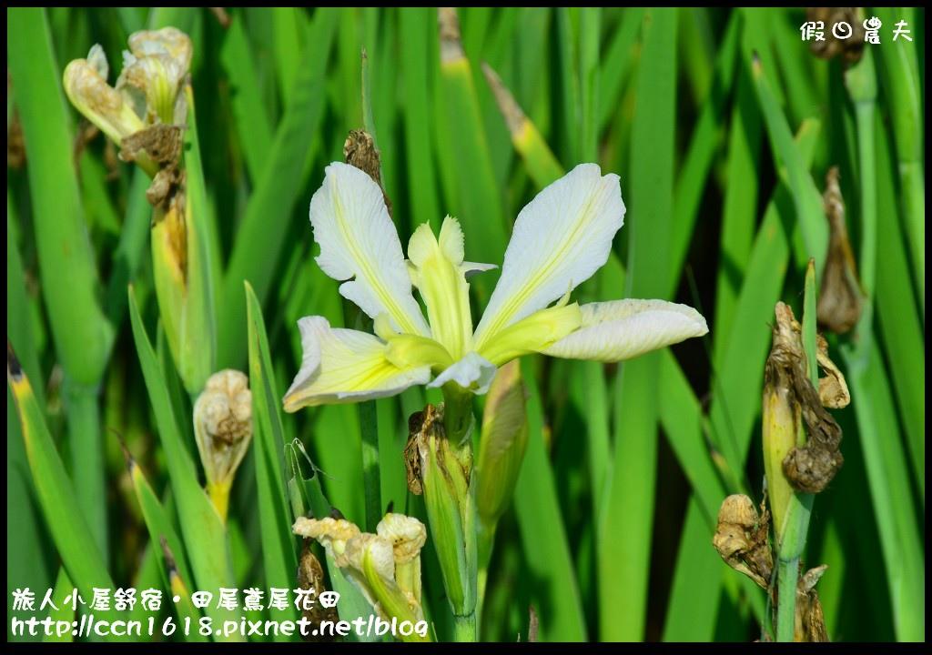 旅人小屋舒宿DSC_6511
