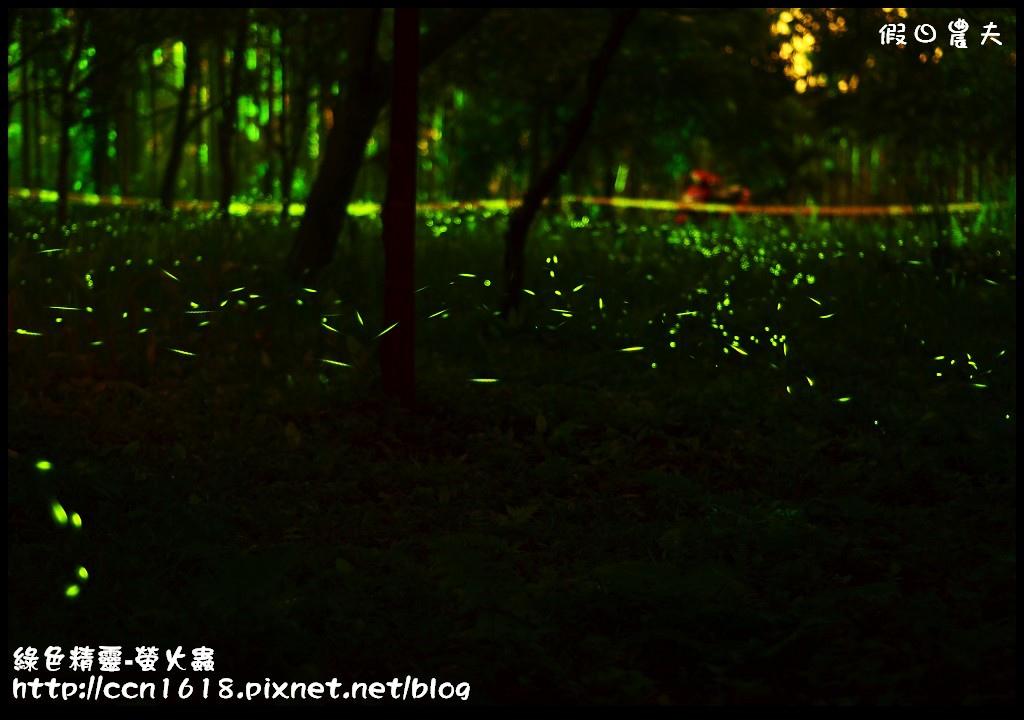 綠色精靈-螢火蟲DSC_2531