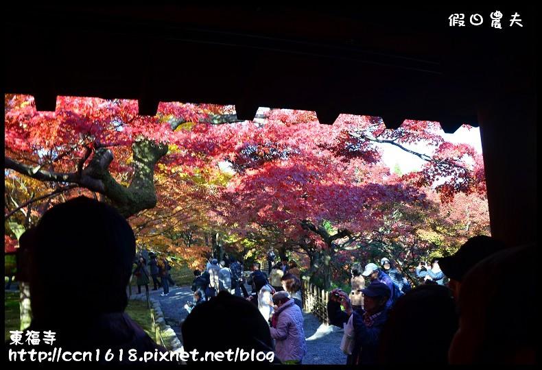 東福寺DSC_5048
