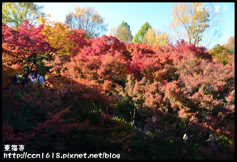 東福寺DSC_5085