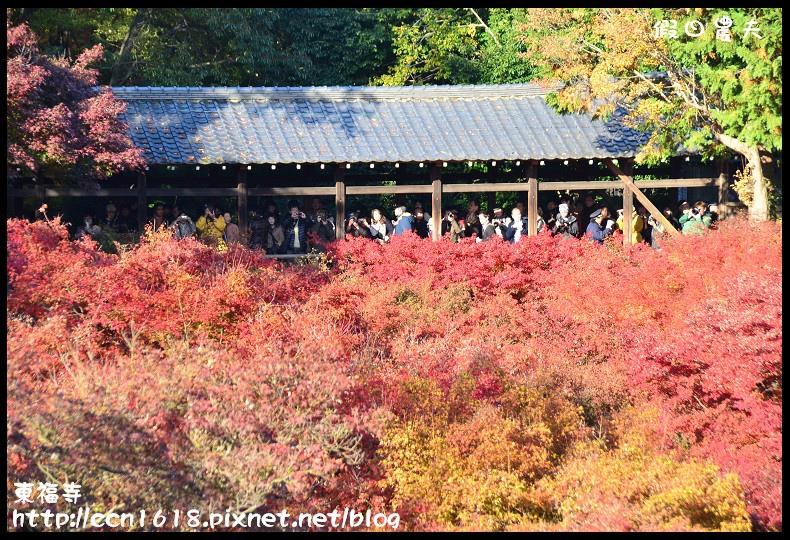 東福寺DSC_5107