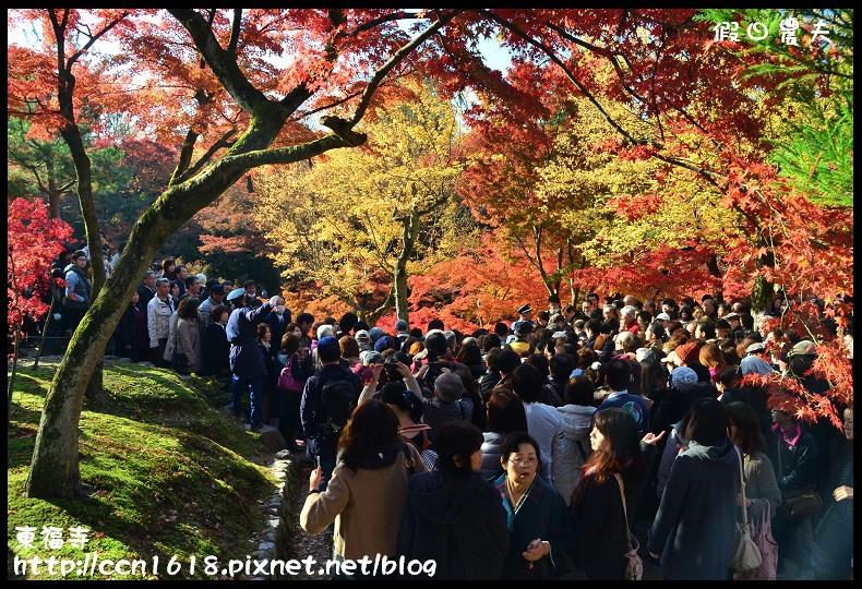 東福寺DSC_5211