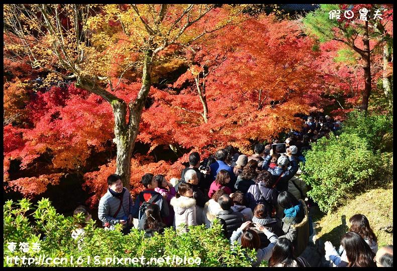 東福寺DSC_5232
