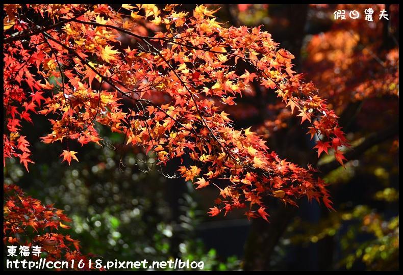 東福寺DSC_5239
