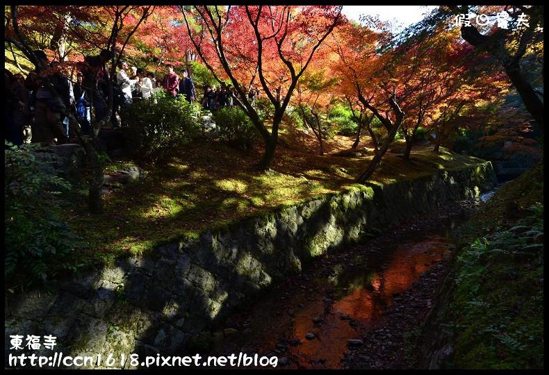 東福寺DSC_5256