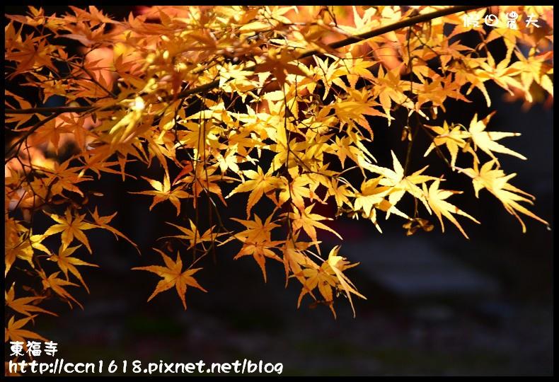 東福寺DSC_5304