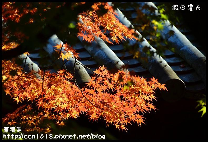 東福寺DSC_5326