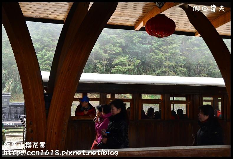 阿里山櫻花季DSC_6781