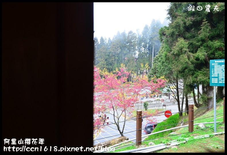 阿里山櫻花季DSC_6790