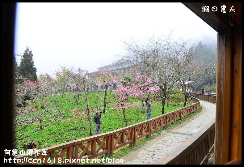 阿里山櫻花季DSC_6838