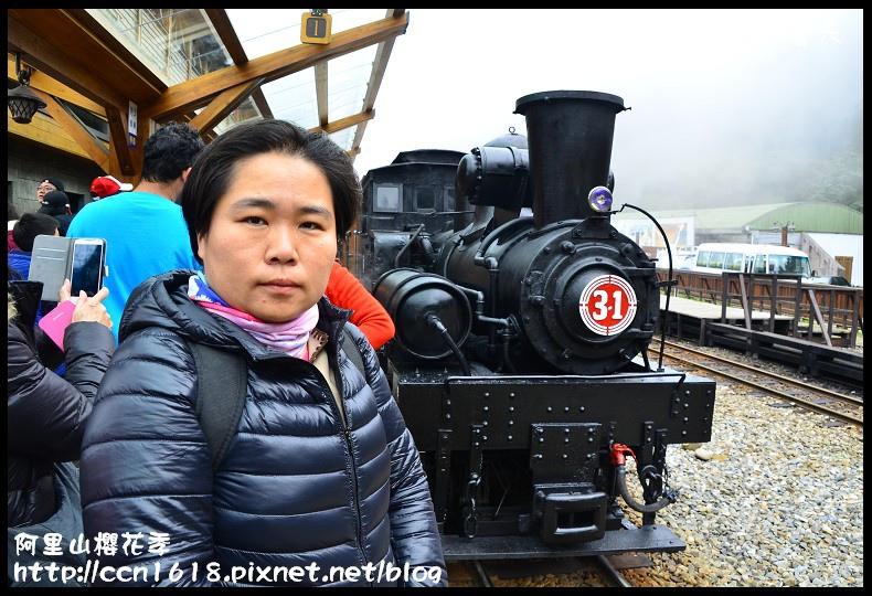 阿里山櫻花季DSC_6865