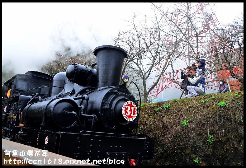 阿里山櫻花季DSC_6902