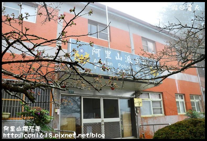 阿里山櫻花季DSC_6915