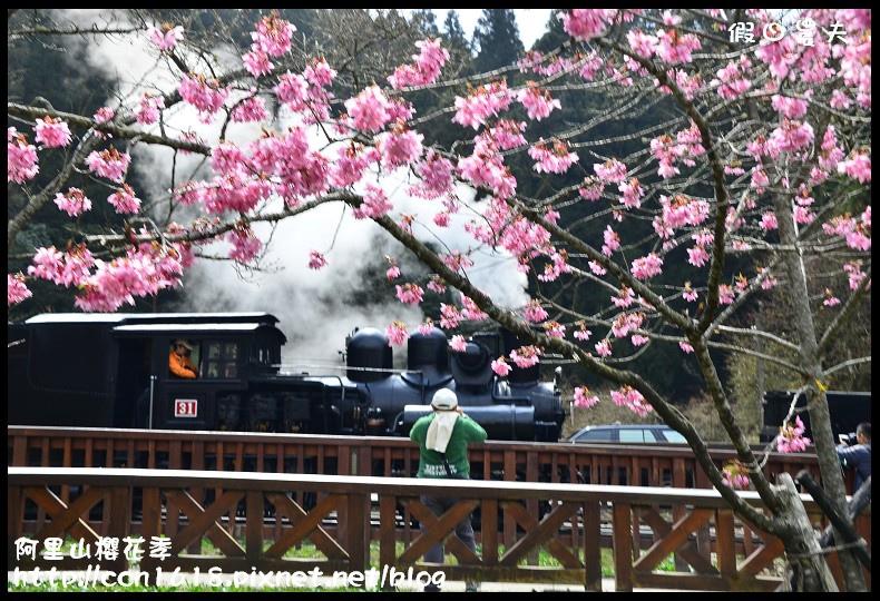 阿里山櫻花季DSC_6960