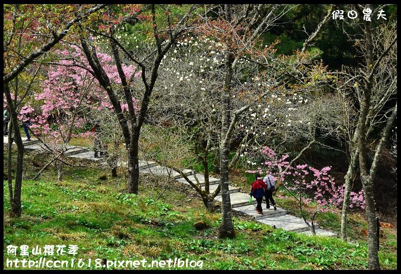 阿里山櫻花季DSC_6972