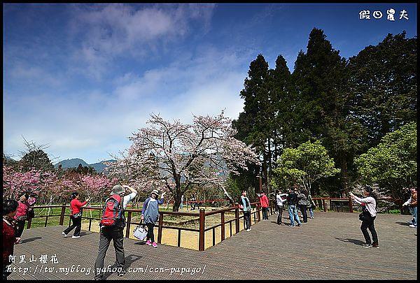 阿里山櫻花DSC_4291