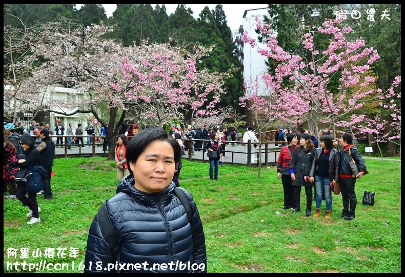 阿里山櫻花季DSC_7014