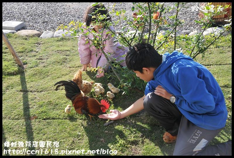 蜻蜓雅茿庭園民宿DSC_1423
