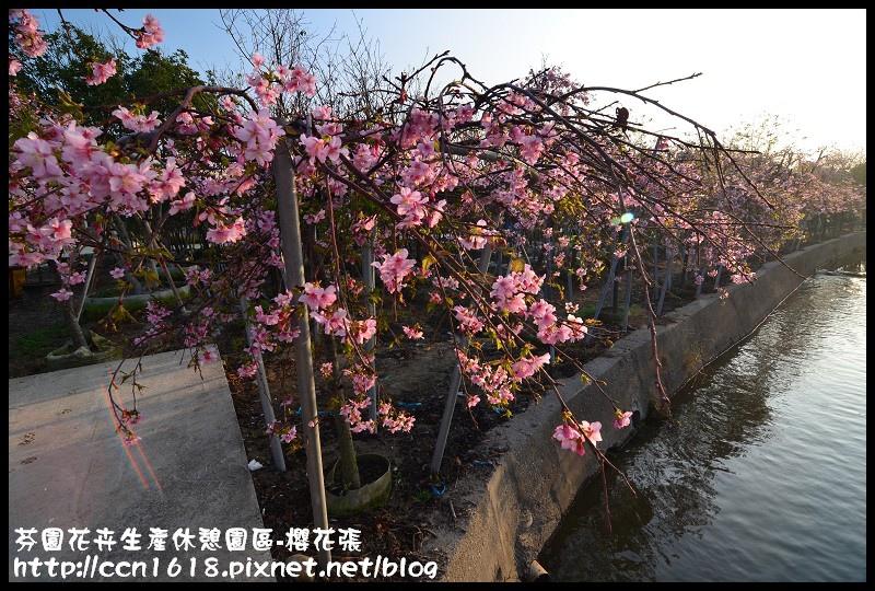 芬園花卉生產休憩園區-櫻花張DSC_3225