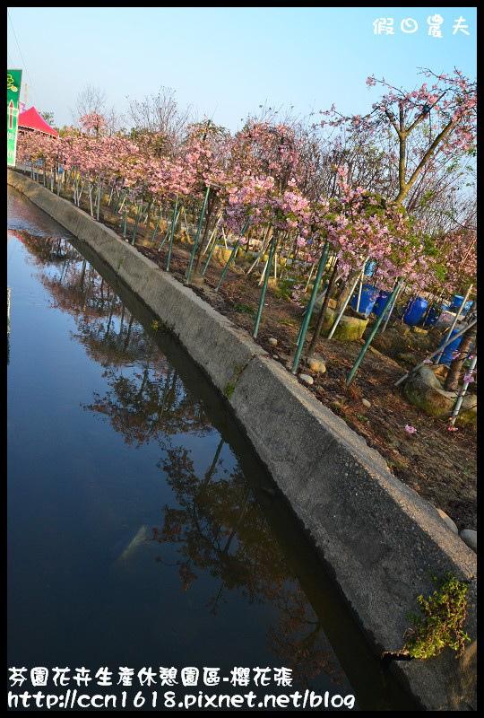 芬園花卉生產休憩園區-櫻花張DSC_3230